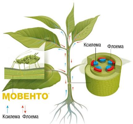 Рух Мовенто в рослині